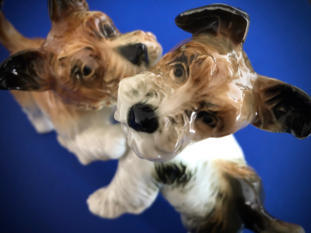PSY terierske DOGS terrier KARL ENS