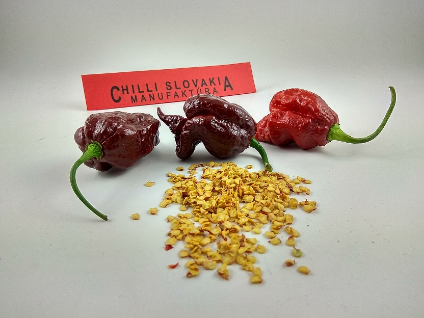 Trinidad Scorpion Chocolate - 10 ks semiačok