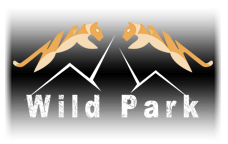logo_transparentpng