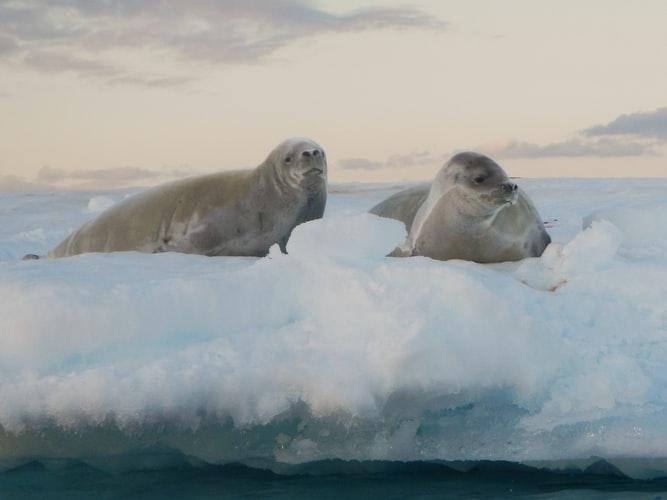 antarktida-priroda-lad-zvierata-tulenjpg