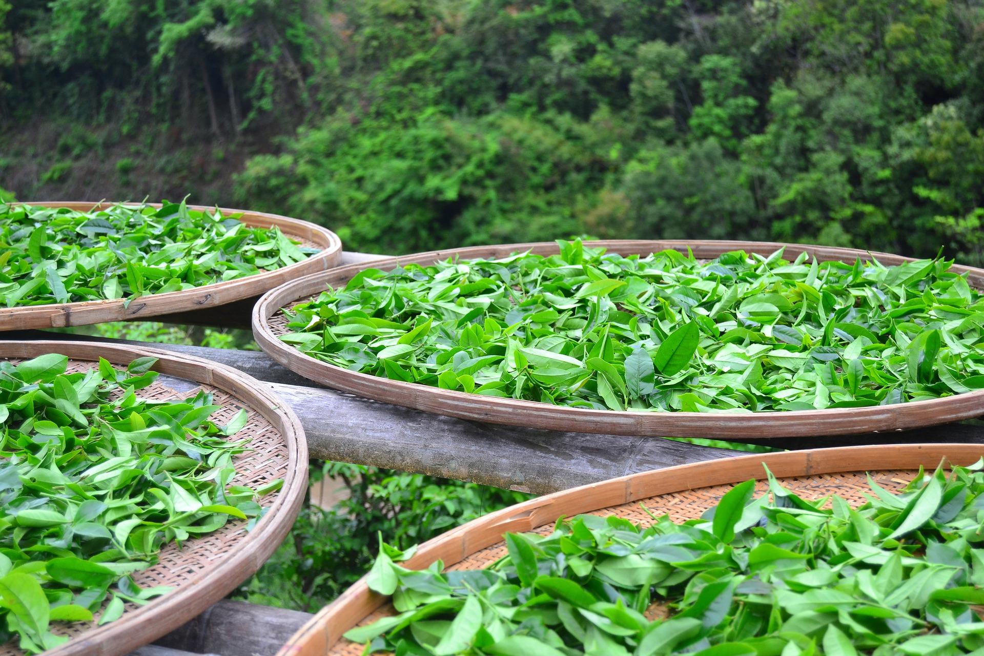 sun-tea-2474281_1920jpg