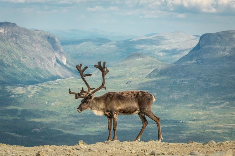 norsko-prirod-zvierata-fjordyjpg