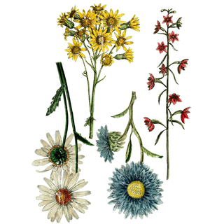 "IOD Decor Transfers ""Wild Flower Botanicals"""