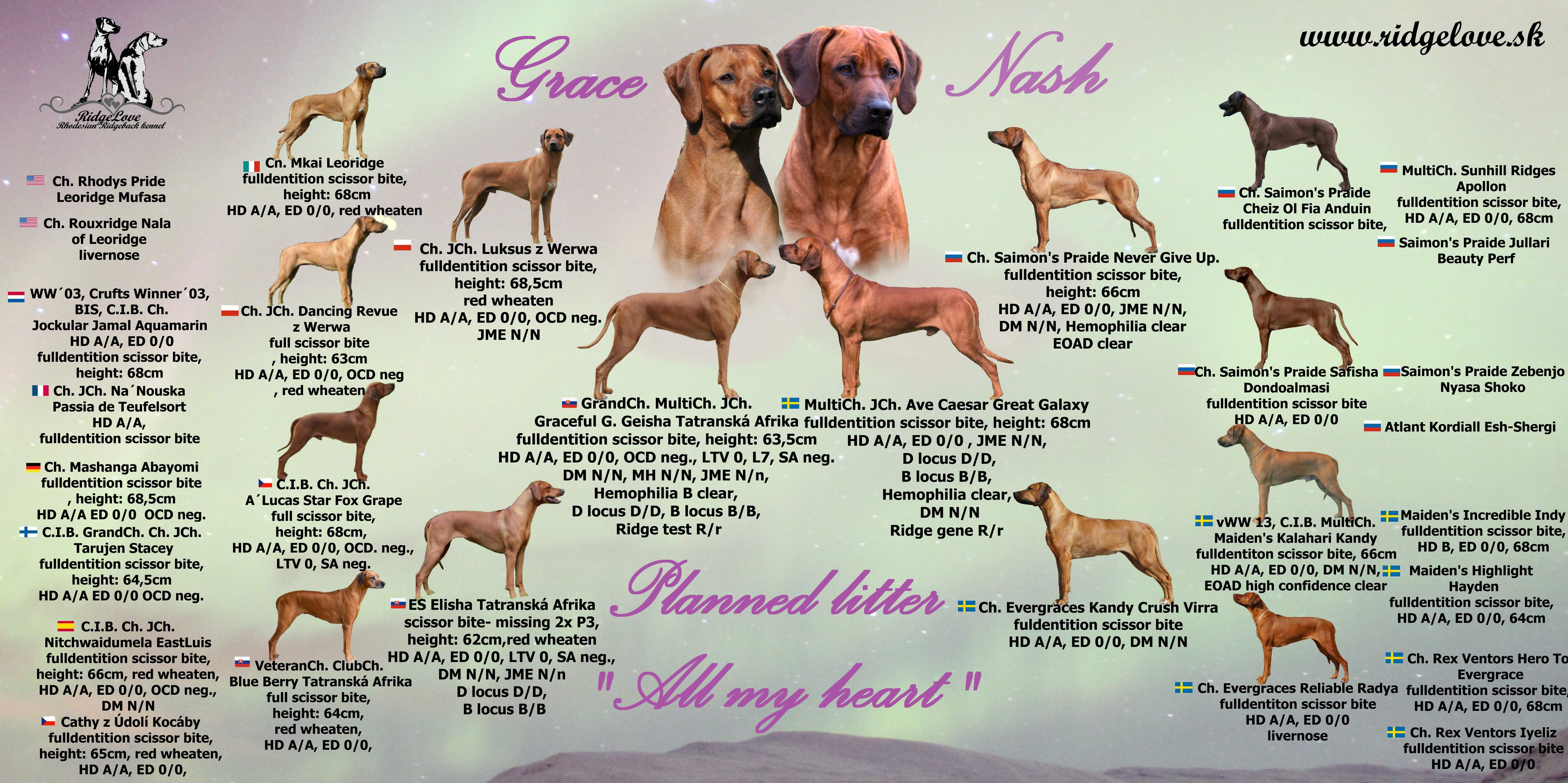 pedigree puppies Grace x Nash, Ave Caesar Great Galaxy puppies, Graceful G. Geisha puppies