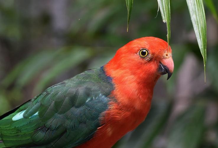 papagaj-kralovsky-blog-sfarbenie-zvierat-ekologicke-cistiace-prostriedkyjpg