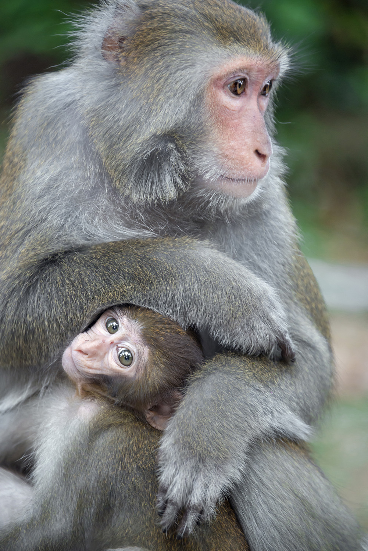 Najviu kriminalitu na ostrove robia prve opicejpg
