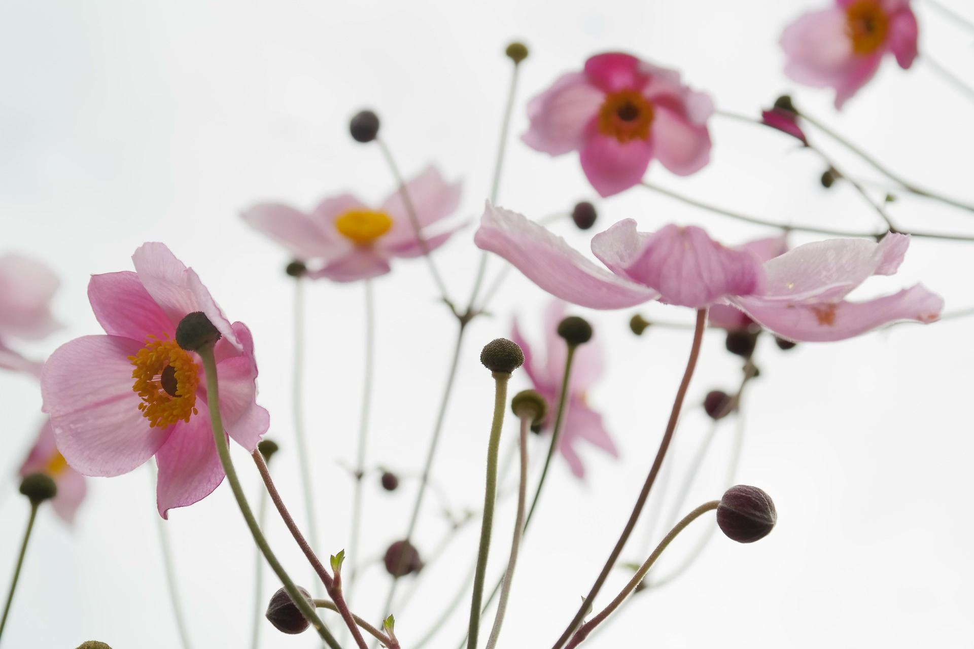 blossom-215565_1920 1jpg