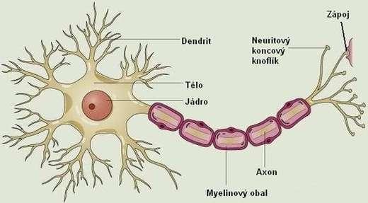 neuronjpg