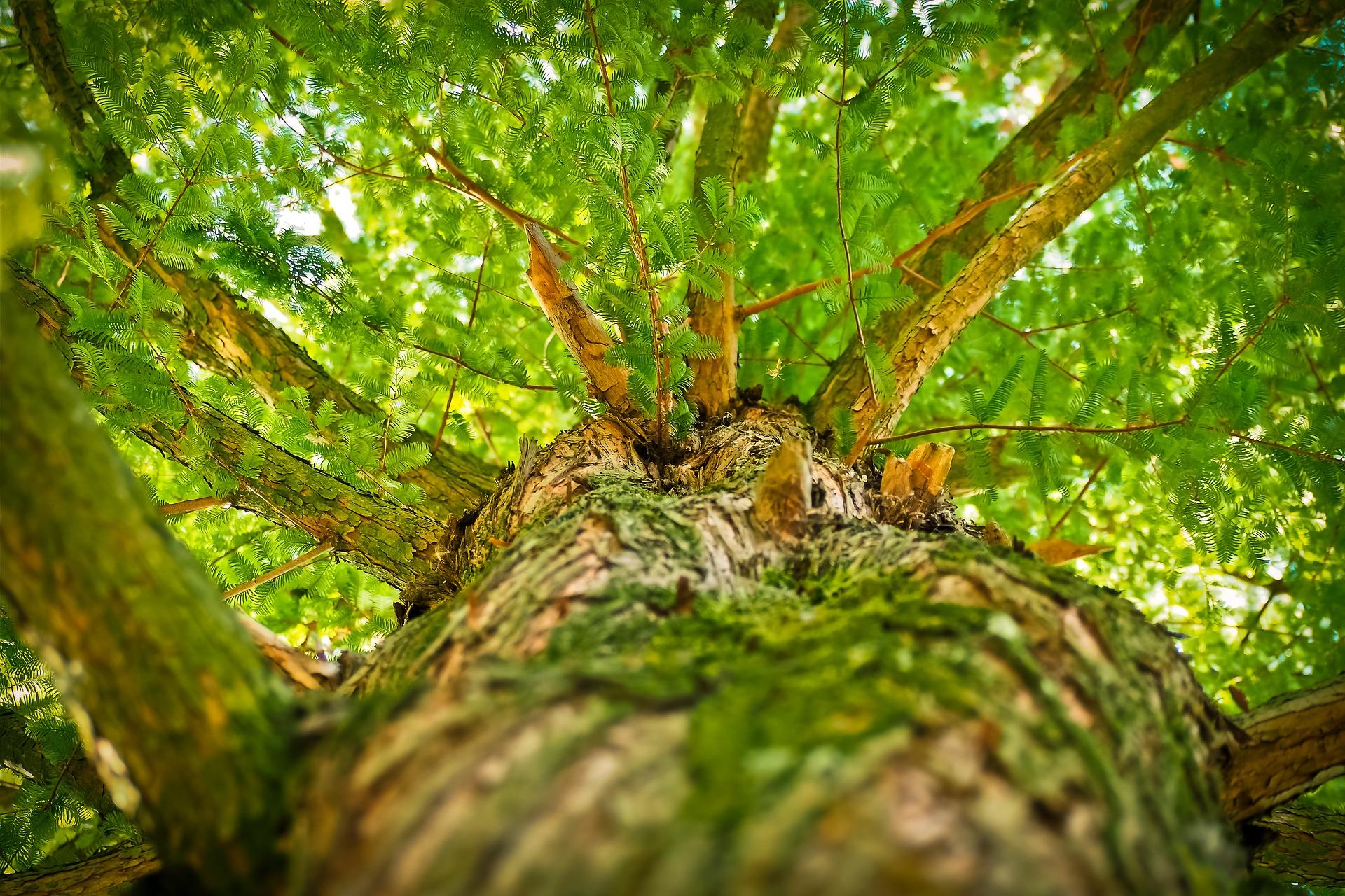 tree-1750784_1920jpg