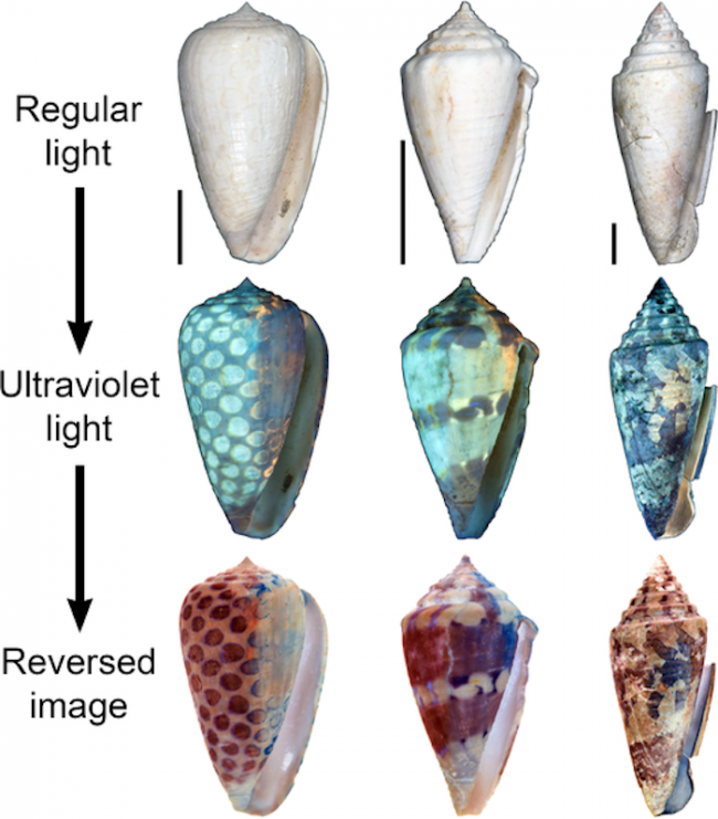 uv-light-revealed-the-way-ancient-shells-looked-millions-of-years-agopng