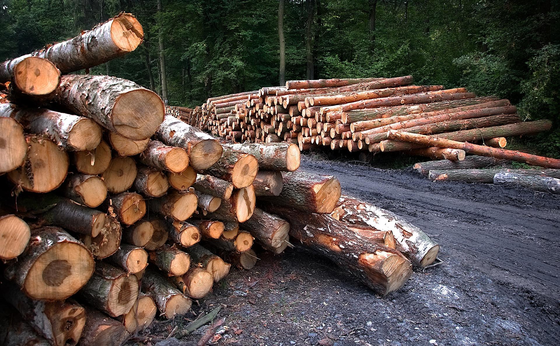 wood-3662510_1920jpg