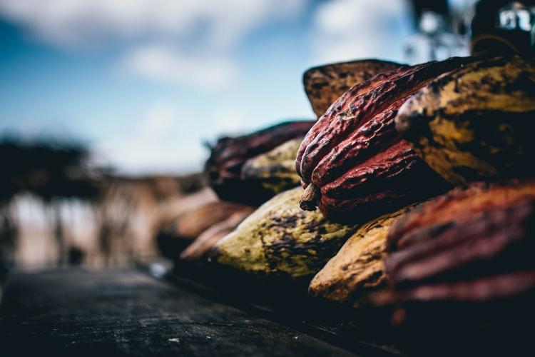 kakao-blog-mexiko-dzungla-ochrana-prirodyjpg