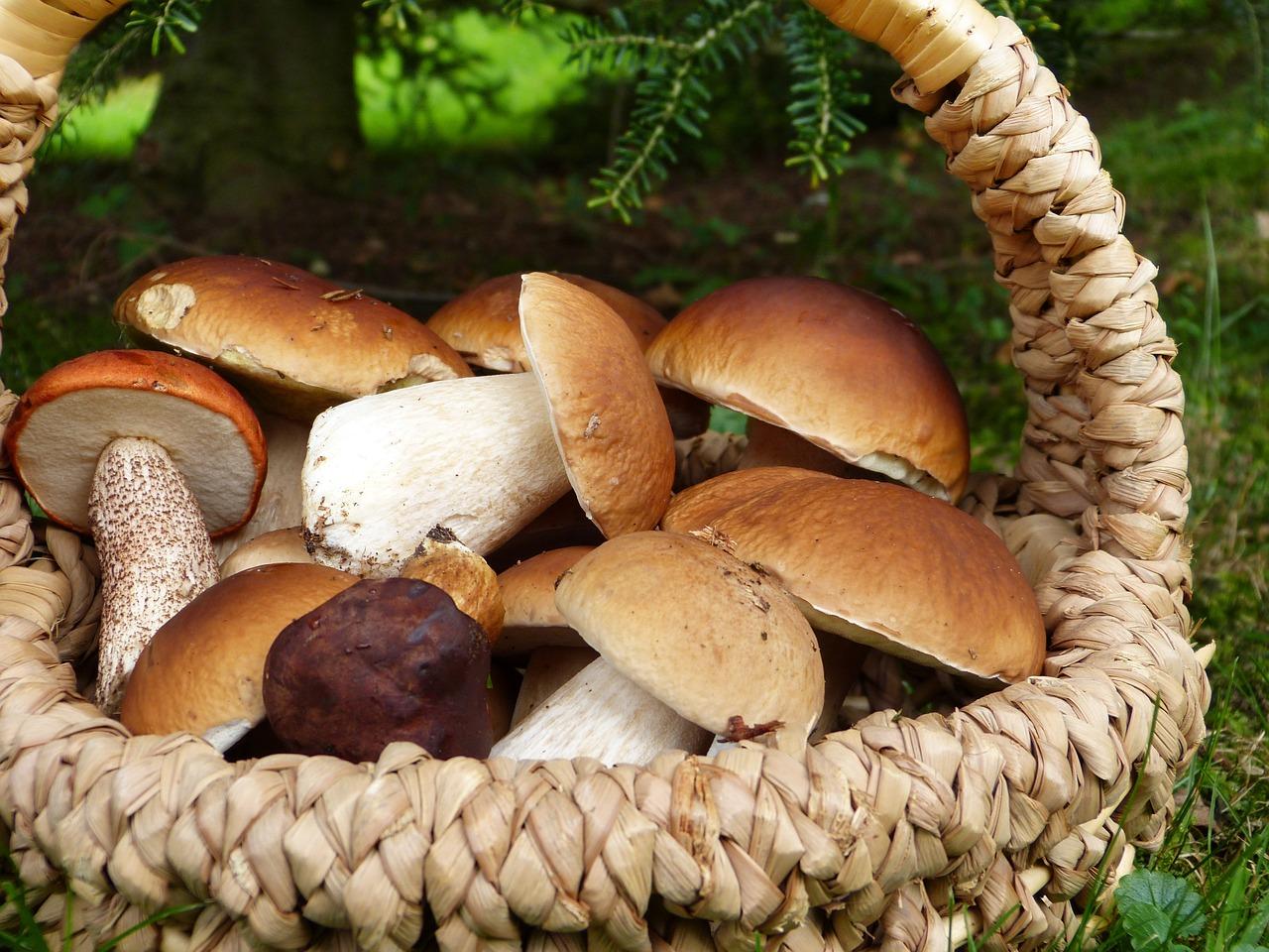 mushrooms-3686917_1280jpg