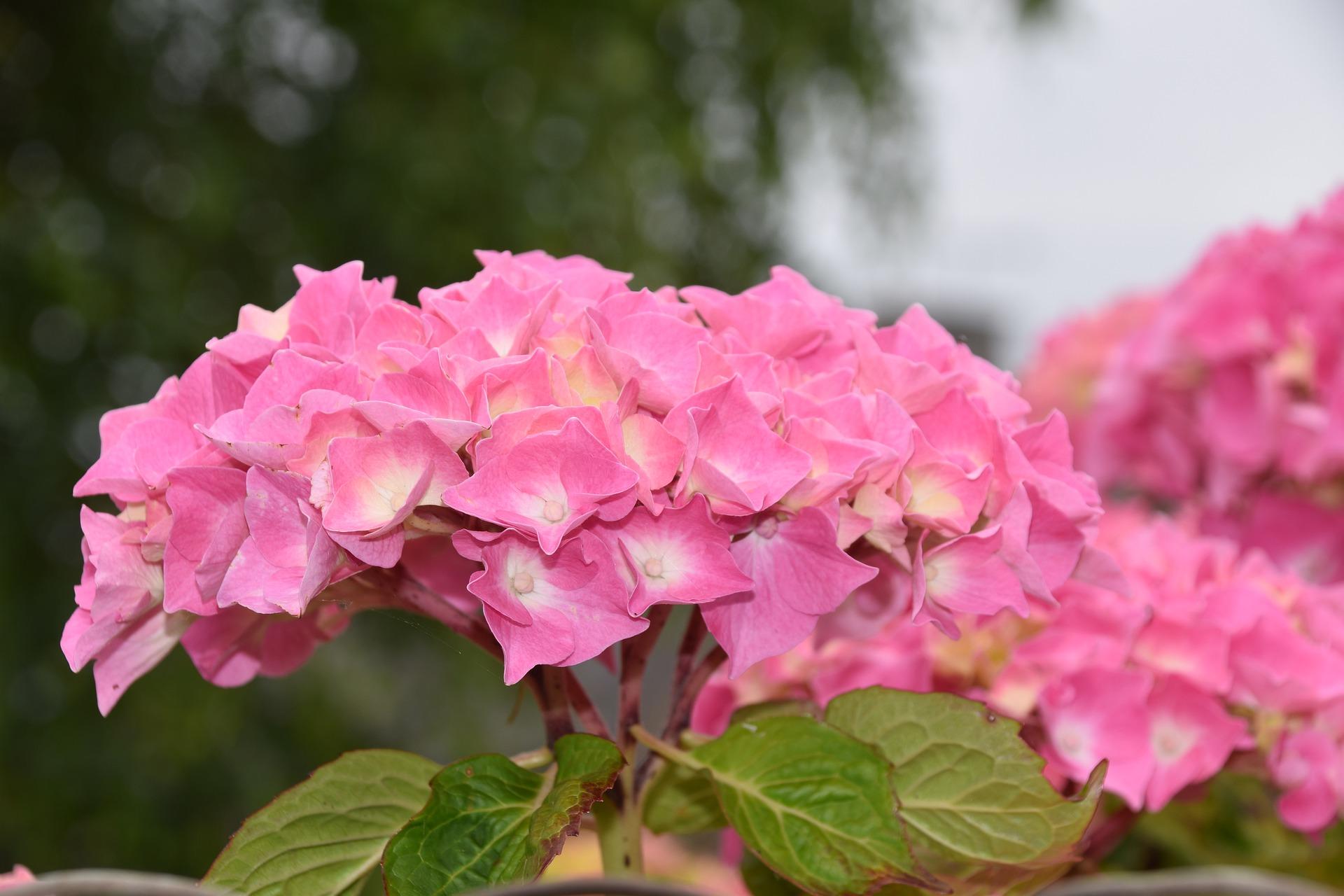 flower-4287551_1920jpg