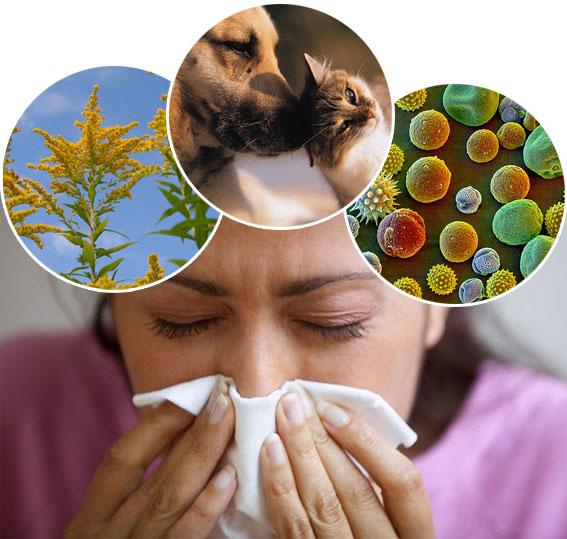 allergies51jpg